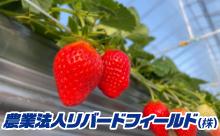 農業法⼈リバードフィールド(株)